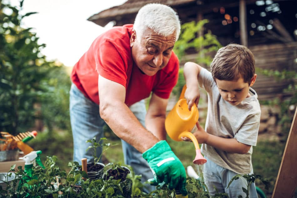Grandfather and grandson watering plants and caring for garden